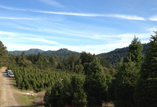 summit christmas tree farm closed for the season we will open the day after thanksgiving 2018 see you then